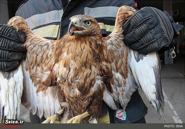 عکس عقاب و شاهین