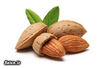 قیمت بادام خواص بادام انرژی بادام