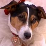 حضور ۲۰۰ میهمان در مراسم ازدواج یک خانم با سگ +عکس