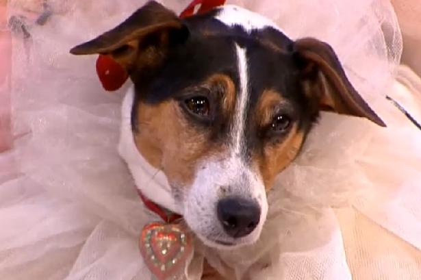 ازدواج عجیب ازدواج جالب ازدواج با سگ ازدواج با حیوان
