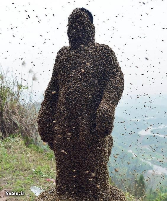 ملکه زنبور عسل قیمت زنبور عسل فروش ملکه زنبور عسل فروش زنبور عسل زنبور عسل پرورش زنبور عسل