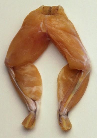 هزینه پرورش قورباغه گوشت قورباغه کلاس پرورش قورباغه قیمت گوشت قورباغه فروش گوشت قورباغه طرح توجیحی پرورش قورباغه پرورش قورباغه استخدام جدید 93 استخدام 93 آموزش پرورش قورباغه