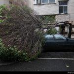 خوششانس ترین راننده در طوفان دیروز تهران + عکس