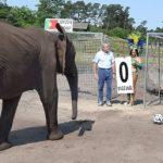 فیلی که جامجهانی 2014 برزیل را پیشبینی میکند + عکس