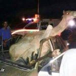 """تصادف شدید شتر با خودروی """"پژو"""" در مسیر ایرانشهر به نیکشهر + عکس"""
