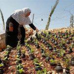 ابتکار مادر فلسطینی با پوکههای گاز اشکآور + عکس