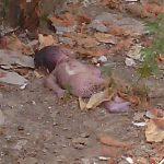 کشف نوزادی مرده در یکی از مدارس رضوانشهر + عکس 18