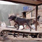 سگ دو زدن واقعی را ببینید + عکس