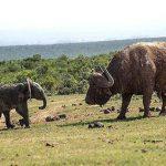 ضربهای که فیل جسور را از پا درآورد + عکس