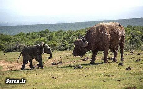 عکس های جالب و زیبا عکس حیوانات اخبار جالب