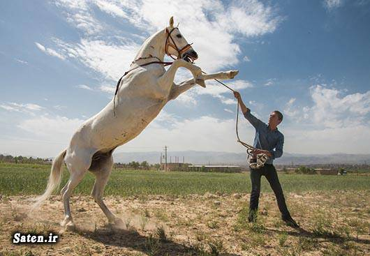 قیمت اسب ارزان