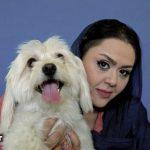 سگت رو کدوم مهد ثبت نام کردی؟ / پذیرایی از سگها با کله پاچه در تهران! + عکس