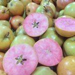 سیب صورتی شگفت انگیز به بازار آمد + عکس