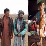 فروشندگان گوشت سگ بازداشت شدند