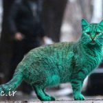 گربهای که یک کشور را به هم ریخت (+عکس)