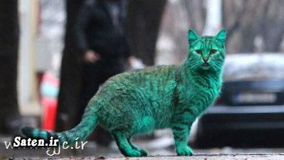 گربه سبز اخبار جالب