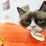 با گربه ۳۲۰ میلیارد تومانی آشنا شوید + عکس
