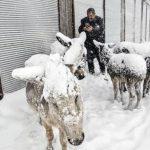 الاغهای یخی در ترکیه !!! + عکس
