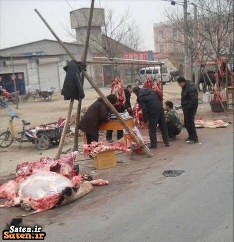 قیمت گوشت الاغ فروش گوشت الاغ
