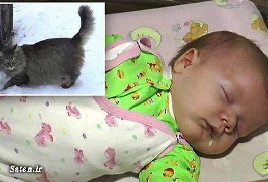 گربه قیمت گربه فداکاری حیوانات فداکاری اخبار جالب