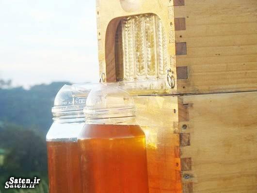 پرورش زنبور عسل بهترین کندوی زنبور عسل آموزش برداشت عسل