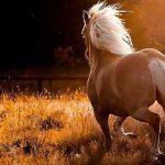 گرانقیمت ترین اسب های ایرانی ، وقتی سر اسب ۸۰۰ میلیونی بریده شد!