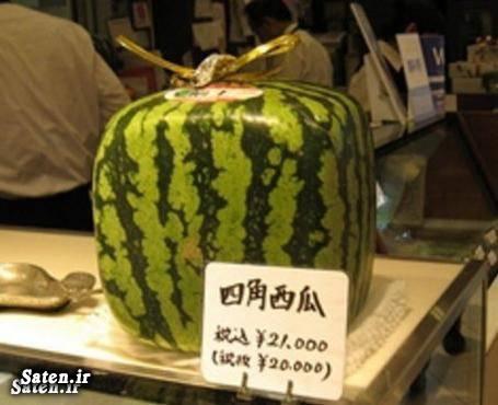 گرانترین میوه سفر به ژاپن زندگی در ژاپن دستمزد در ژاپن حقوق در ژاپن