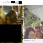 شناسایی دو ایرانی گرداننده صفحات غیر اخلاقی و مبتذل در فیسبوک