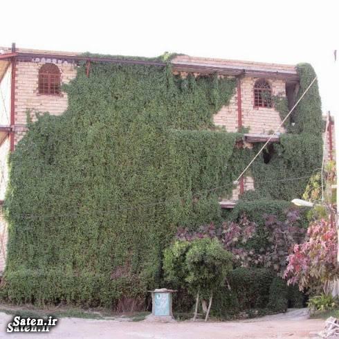 نما ساختمان عکس خلاقیت خلاقیت ایرانی بهترین نمای ساختمان بهترین نما ساختمان