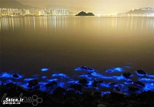 عکس زیبا سواحل چین ساحل دریا