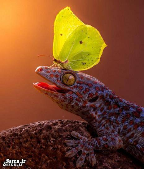 عکس زیبا عکس حیوانات عکس جالب