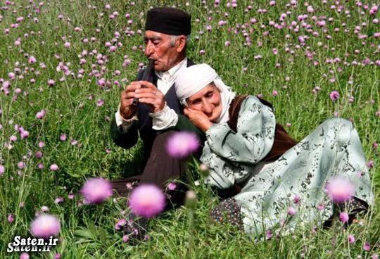 رژیم افزایش عمر راز طول عمر راز افزایش عمر افزایش طول عمر