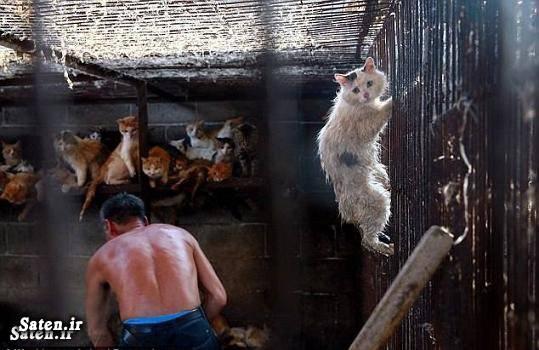 گوشت سگ گدشت گربه قیمت گربه زندگی در چین