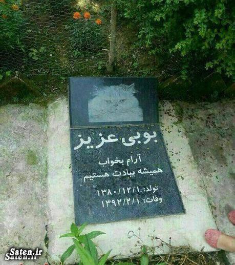 عکس دیدنی عکس جالب عکس تهران زندگی در تهران اخبار تهران