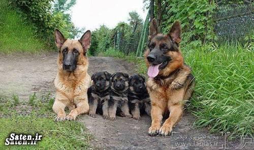 عکس های زیبا عکس های جالب و زیبا عکس طبیعت عکس حیوانات