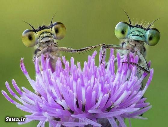 عکس زیبا عکس حیوانات عکس حشرات