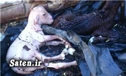 عجیب الخلقه حیوانات عجیب دنیا اخبار کرمان اخبار ریگان