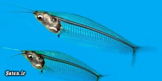 ماهی زینتی شغل جدید شغل پر درآمد حیوات عجیب بهترین شغل
