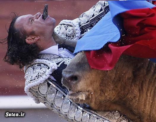 گاو بازی شکار تمساح خوش شانس خرس قطبی حوادث واقعی