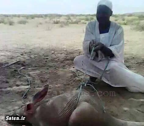عکس شکار خرگوش حیوانات عجیب دنیا اخبار سودان