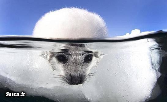 عکس های زیبا عکس های جالب و زیبا عکس طبیعت عکس حیوانات حیات وحش توریستی غنا