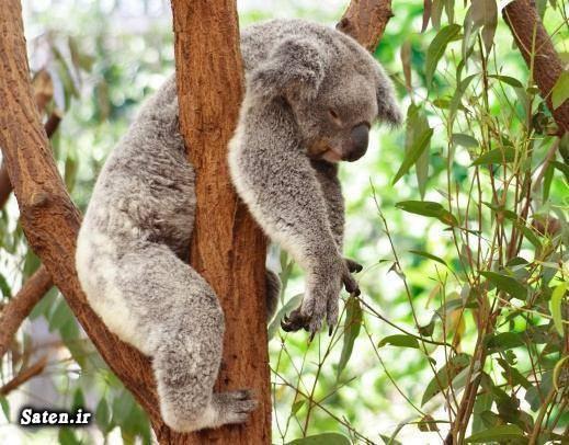 عکس های زیبا عکس طبیعت عکس حیوانات