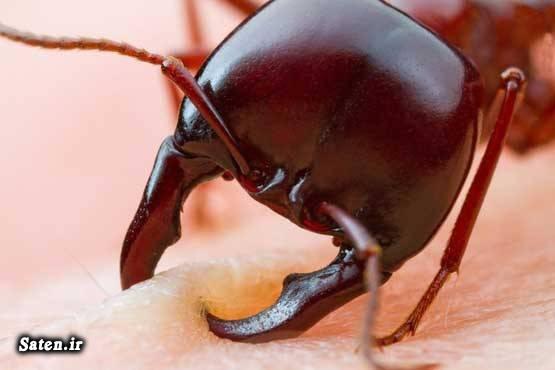 مورچه قدرت مورچه عکس های زیبا عکس های جالب و زیبا عکس مورچه