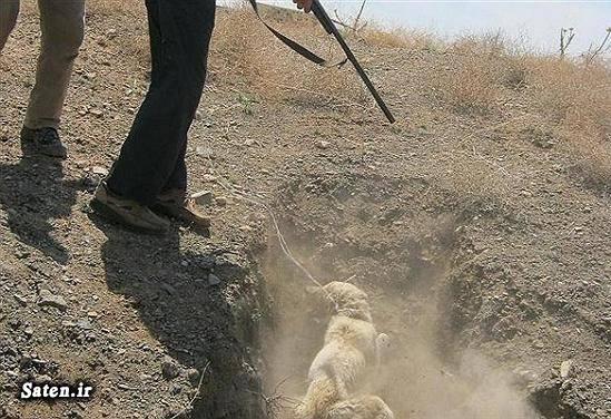 شهرداری مشهد سوابق جاوید آل داوود سگ کشی حیوان آزاری اخبار مشهد