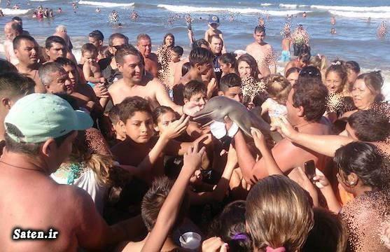عکس سلفی سواحل آرژانتین دلفین کمیاب حیوان کمیاب حویان نادر