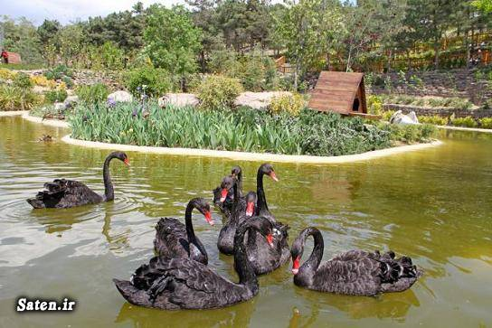 مهمان طهران تور تهرانگردی پارک ژوراسیک تهران باغ پرندگان تهران