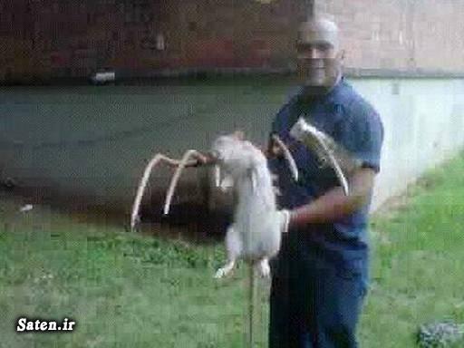 موش عجیب عکس جالب حیوان عجیب اخبار انگلیس