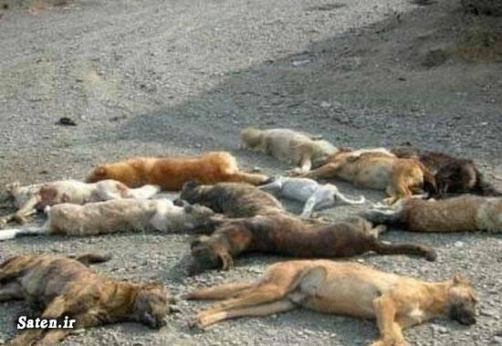 مجازات سگ کشی سگ کشی اخبار تبریز
