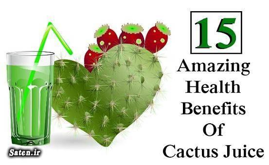 طب سنتی خوردن کاکتوس خواص گیاهان خواص کاکتوس Cactus
