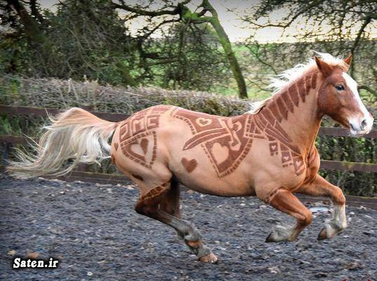 عکس خلاقیت عکس اسب بهترین اسب